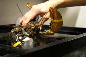 finns live lobster victoria bc